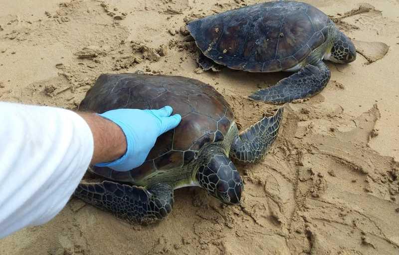 Animais vivos foram levados para reabilitação, no ES — Foto: Divulgação/ CTA