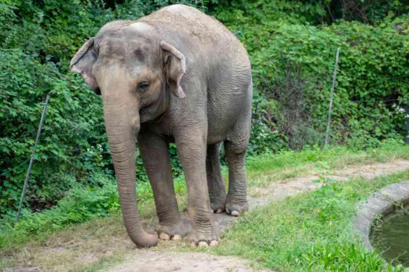 Ativistas afirmam que a elefanta Happy é uma pessoa