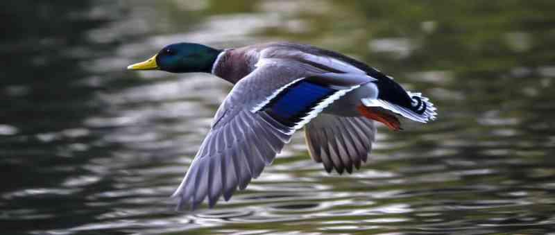 Vitória! Cientistas salvam centenas de pássaros de testes 'científicos'