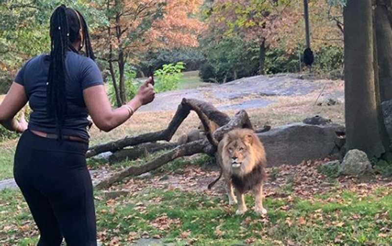 Mulher não identificada dançou e acenou para leão no zoo do Bronx, em Nova York — Foto: Reprodução/Instagram
