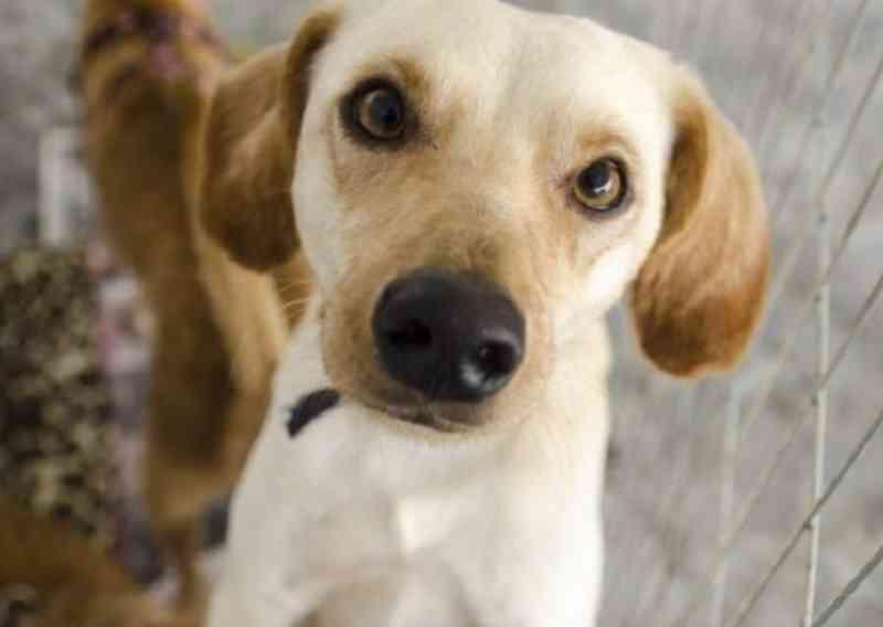 Prefeito veta projeto que proíbe extermínio de animais em Goiânia, mas Câmara derruba