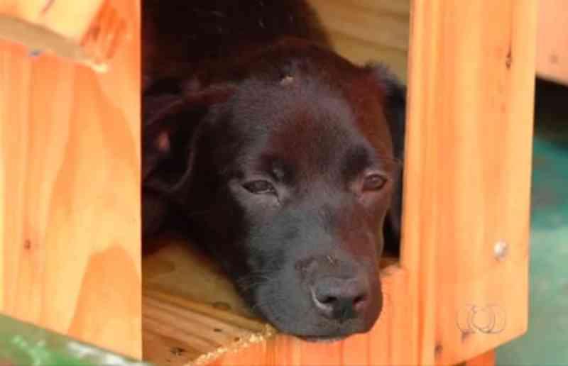 Vereadores aprovam projeto que dá descontos em impostos para quem adotar animais, em Goiânia, GO