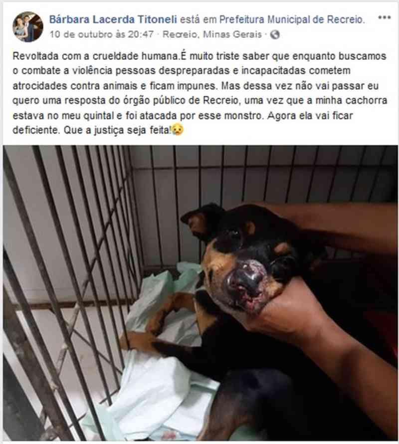 Cachorra fica ferida após ser atingida por roçadeira da Prefeitura de Recreio, MG