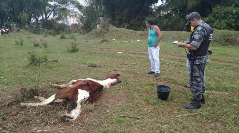 Cavalo em situação de maus-tratos é resgatado no bairro Santana em Varginha, MG