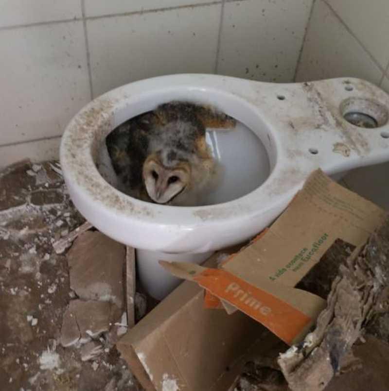 Bombeiros resgatam corujas em apartamento na Grande BH
