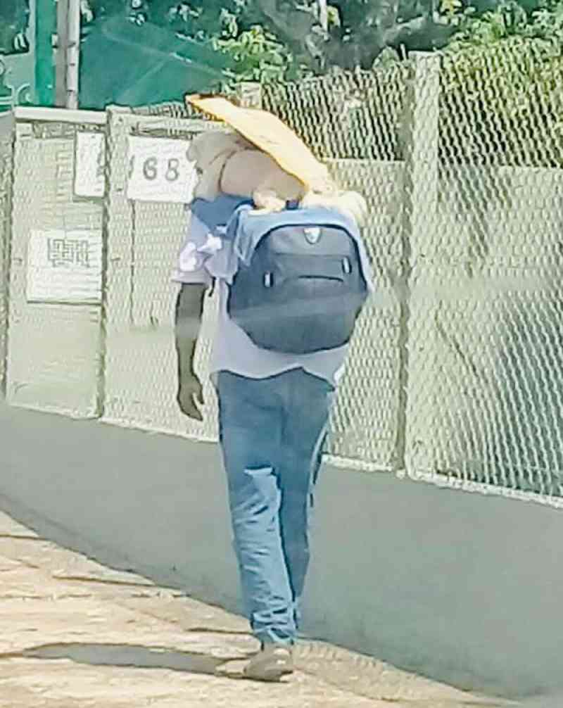 Homem coloca cachorro nas costas e segura papelão em cima para protegê-lo de calor de mais de 40°C no asfalto