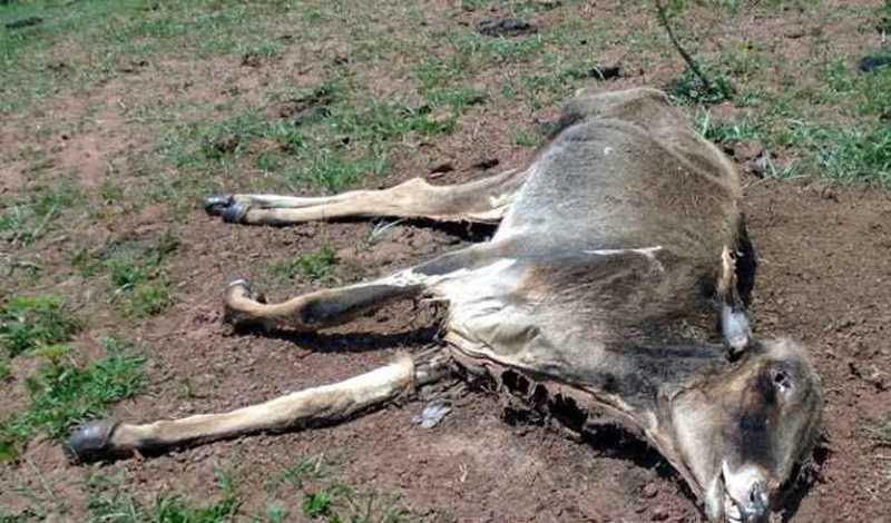 Animal encontrado morto pelos policiais na fazenda. Foto: Divulgação
