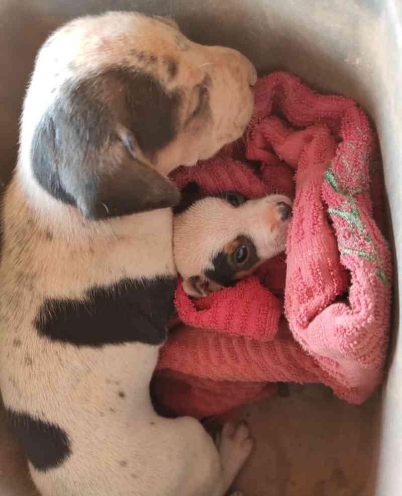 Cães e gatos abandonados em garimpo ilegal são resgatados após desocupação em MT