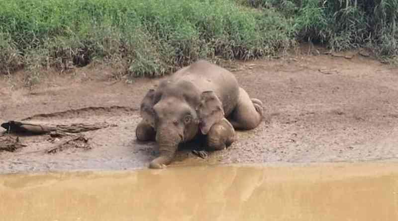 Elefante encontrado com 70 buracos de bala gera revolta