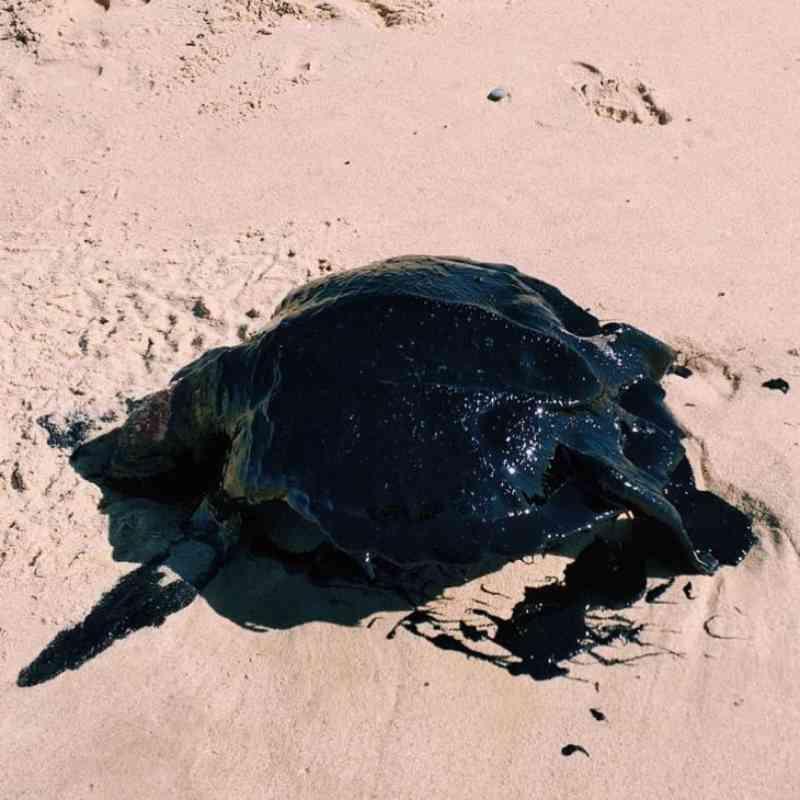 Mancha de óleo afeta vida marinha capixaba, diz especialista