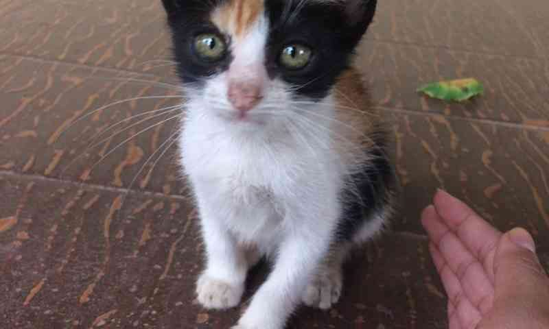 Câmeras serão usadas para identificar pessoas que abandonem animais nas unidades da Ufopa em Santarém, PA
