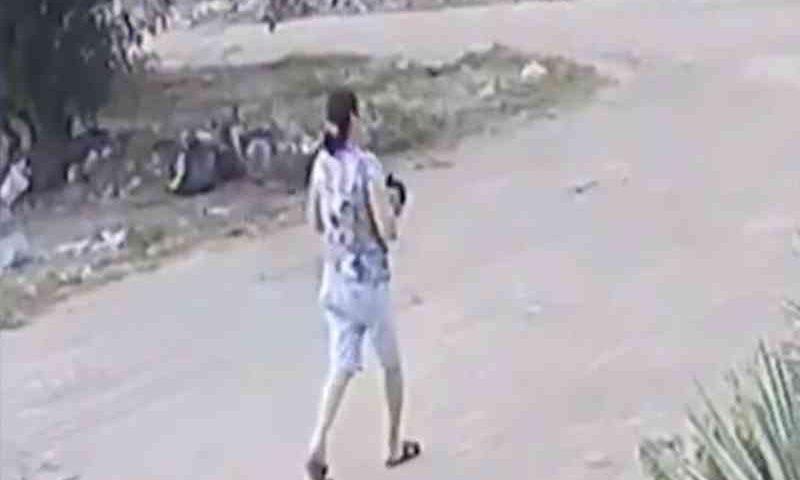 Gato é morto após mulher arremessá-lo em quintal com pit bull em João Pessoa, PB; vídeo