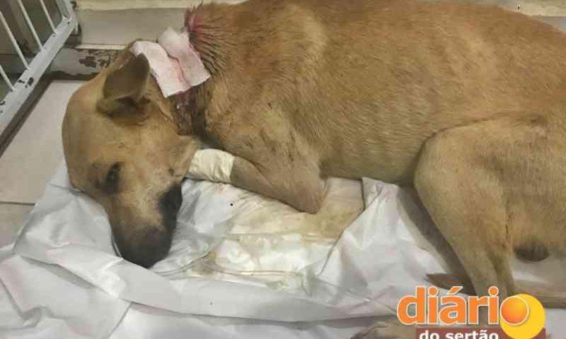 Cachorro é encontrado quase morto e precisa de doações para tratamento em Sousa, PB