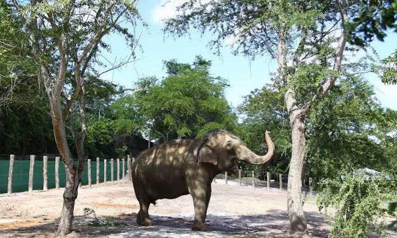 Santuário dos Elefantes vê 'gravidade' em saúde de Lady e PMJP descarta maus-tratos