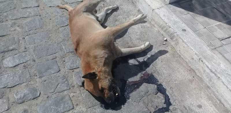 Novos casos de cachorros envenenados são registrados em Pombal, PB