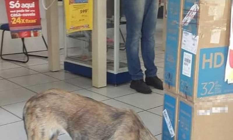 Funcionários de loja abrigam cadela de rua e fazem campanha de adoção em Teresina — Foto: Reprodução