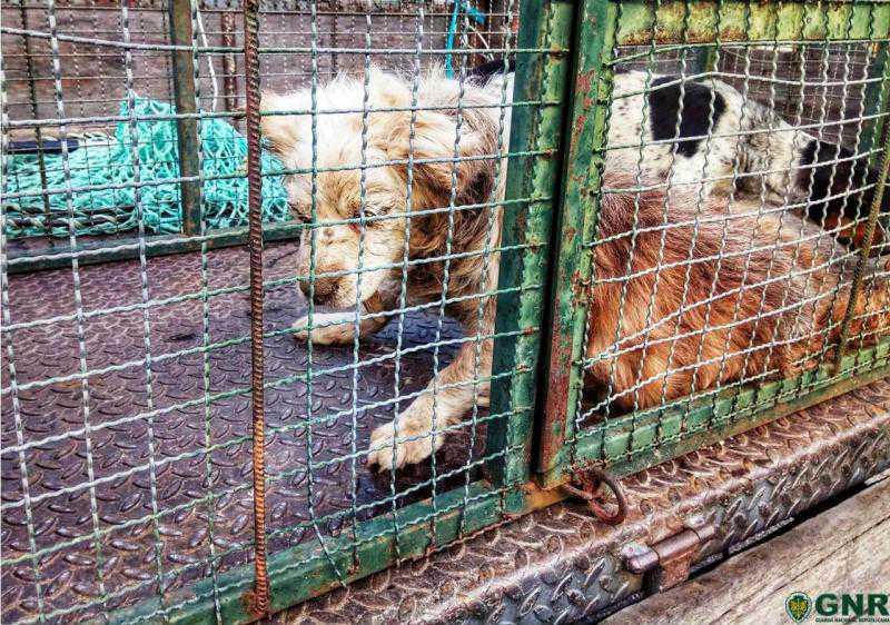Deixou cães acorrentados, sem água e sem comida, durante vários dias