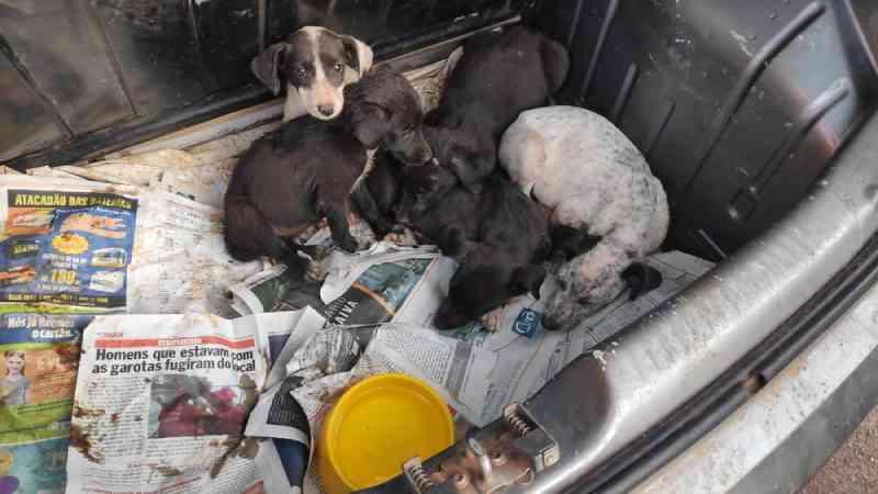Filhotes de cachorros são resgatados em porta-malas de carro, em Cascavel, PR