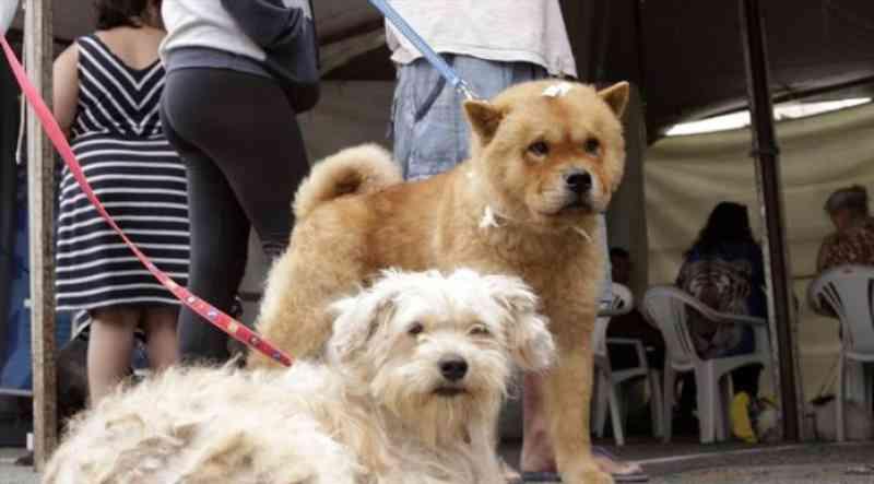 Denúncia de maus-tratos contra animais agora pode ser feita pelo 156 em Curitiba, PR