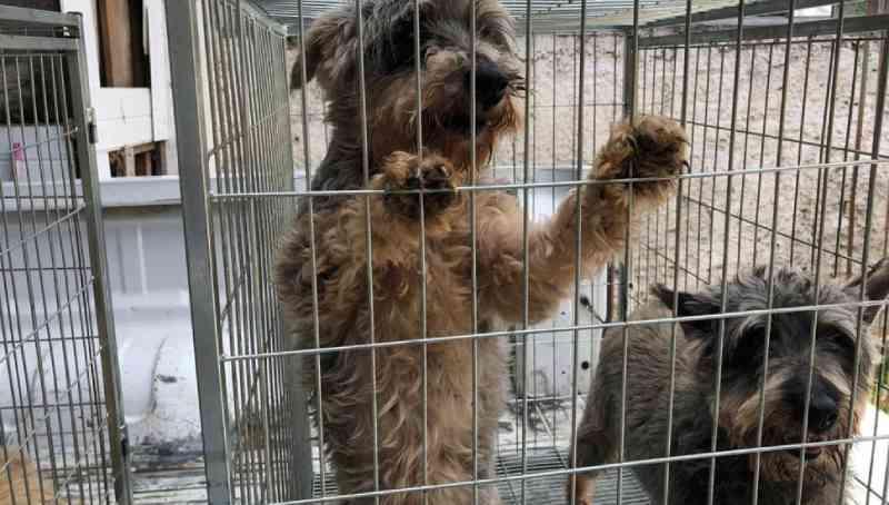 Mais de 160 animais em situação de maus-tratos são resgatados e loja é interditada na Grande Curitiba
