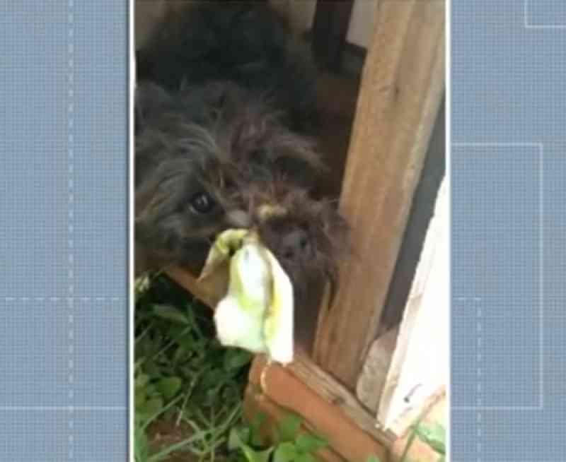 Vídeo mostra cachorro com focinho amarrado com tecido e acorrentado no interior do Paraná
