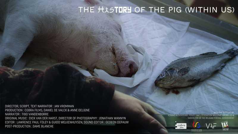 Mostra Ecofalante-USP terá cinema com a temática 'Política, psicanálise, filosofia e direitos dos animais'