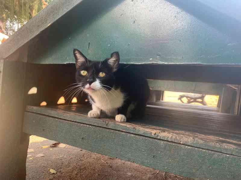 Permanência de casinhas para gatos gera impasse no Campo de Santana, no Rio de Janeiro
