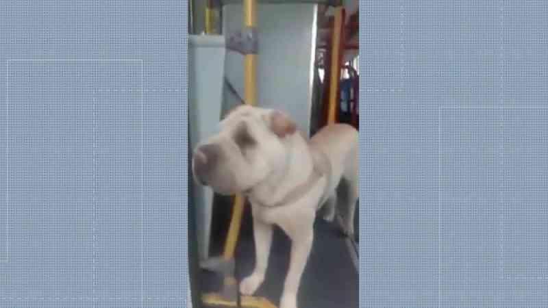Motorista de ônibus salva cachorro atropelado em rua do Rio e vídeo do animal viraliza na internet