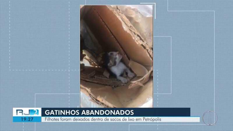 Filhotes de gato são jogados no lixo dentro de sacolas plásticas no RJ
