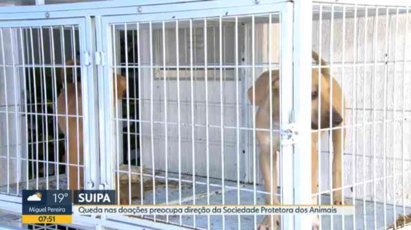 Suipa faz campanha para arrecadar doações e estimular a adoção de animais abandonados
