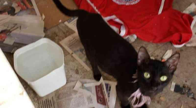 Polícia Civil resgata 48 gatos vítimas de maus-tratos no Alecrim em Natal, RN