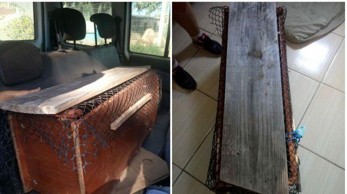 Gatos são lacrados dentro de caixa em Camaquã, RS