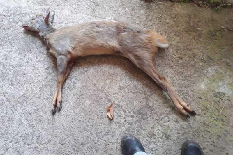 O animal foi encontrado com marcas de tiros, na área de preservação ambiental agonizando e preso no local