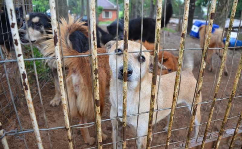 Lei inclui a gratuidade da castração dos animais apreendidos e resgatados. Crédito: Arquivo A Hora