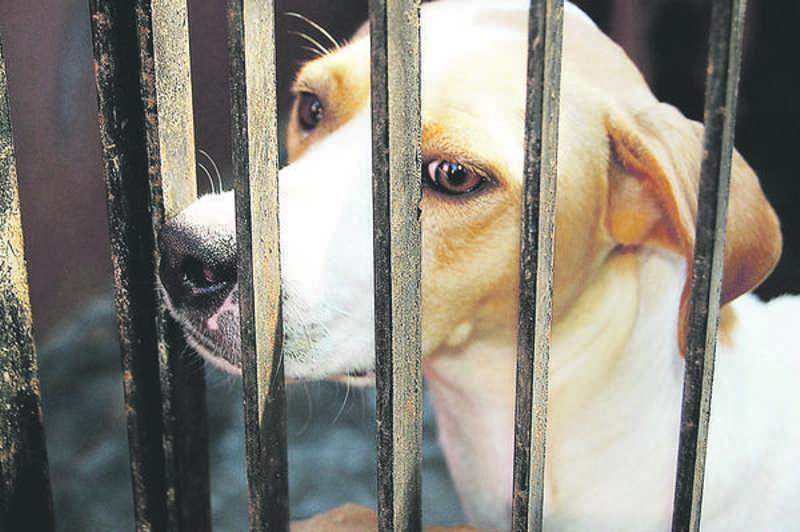 Primeiro bairro a ter cães e gatos castrados será o Santo Antônio - Rafael Scheeren Grün/Assessoria de Imprensa/Divulgação