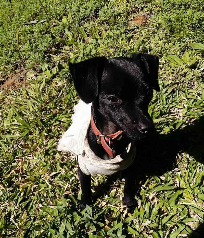 Cão é sacrificado após ser vítima de envenenamento em Concórdia, SC