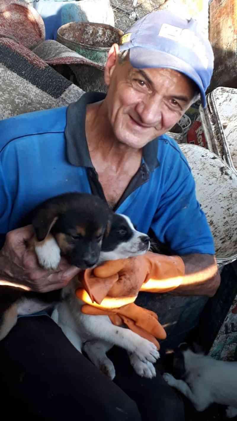 Gari resgata filhotes de lixo e projetos buscam erradicar o abandono de animais em SC