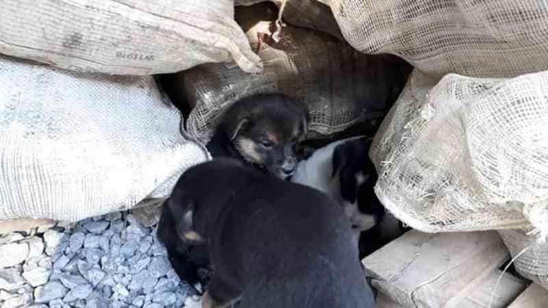 Gari de Imbuia, no Alto Vale do Itajaí, recolhe animais abandonados no lixão da cidade