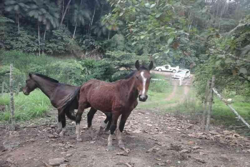 Acusado por maus-tratos é detido, um cavalo teve que ser sacrificado