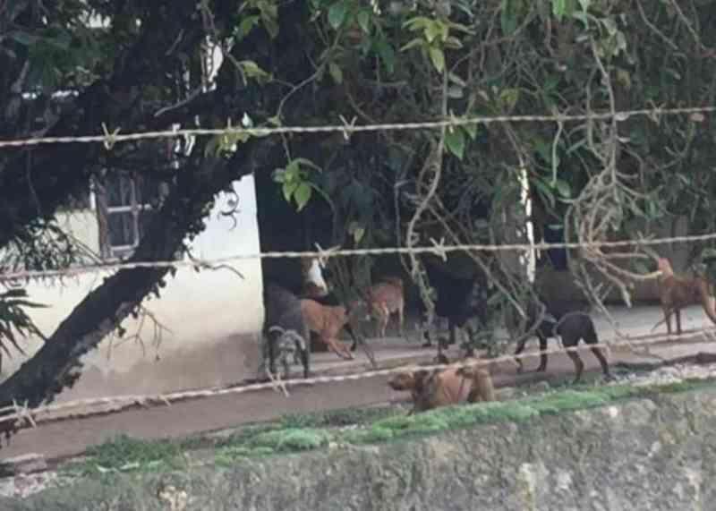 Idosos ficam sem condições para cuidar de cães em Navegantes (SC), e prefeitura busca tutores