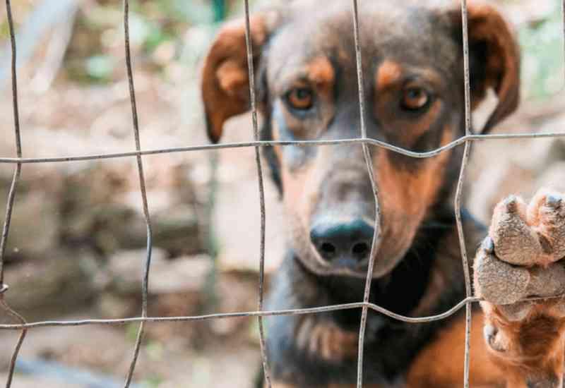 Projeto autoriza resgate de animais para cessar maus-tratos em São Miguel do Oeste, SC