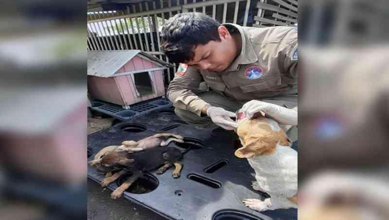 GOR é acionado e atua no caso dos cães mortos em Tijucas, SC