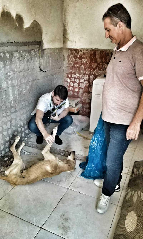 Cão morto e passarinho são apreendidos em casa de caçador de capivaras no bairro Cordeiros, em Itajaí, SC