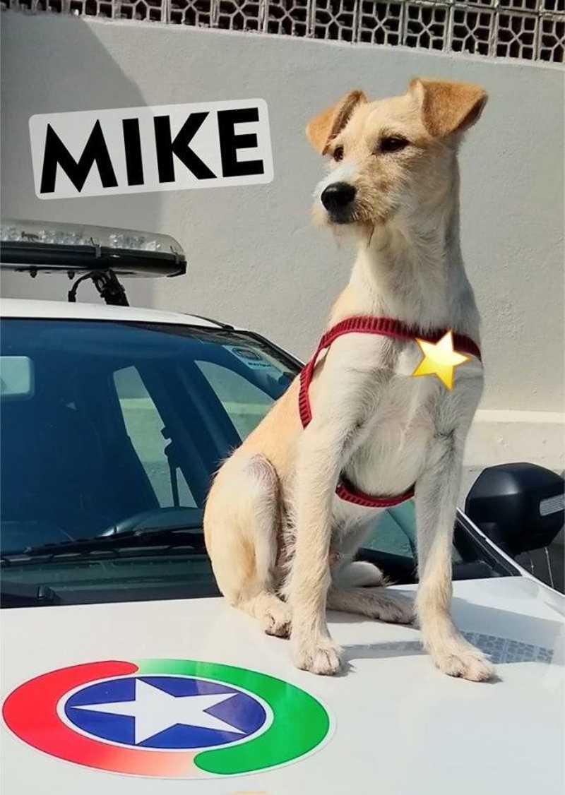 Mike posa para fotos (Foto: Divulgação)