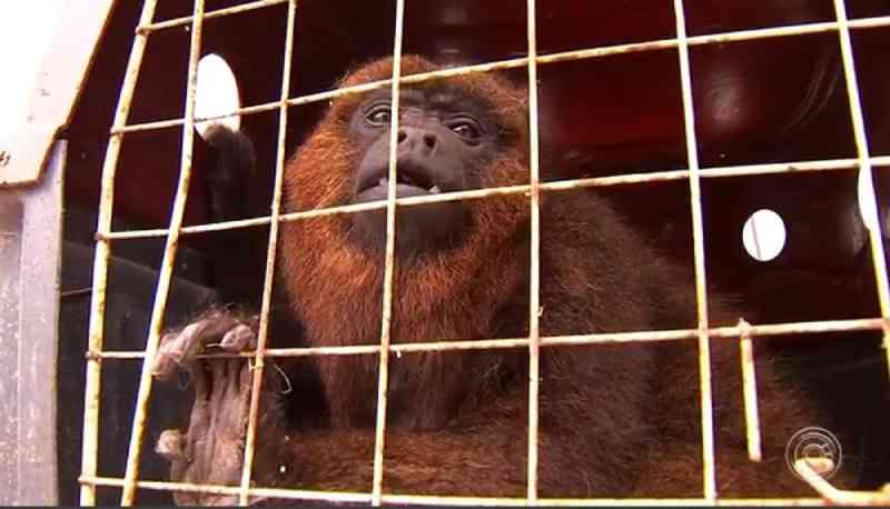Macacos, cobras e aves exóticas são apreendidos em chácara no interior de SP