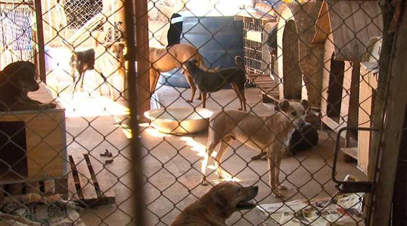 Animais ficam em canil improvisado em Araraquara — Foto: Reprodução/EPTV