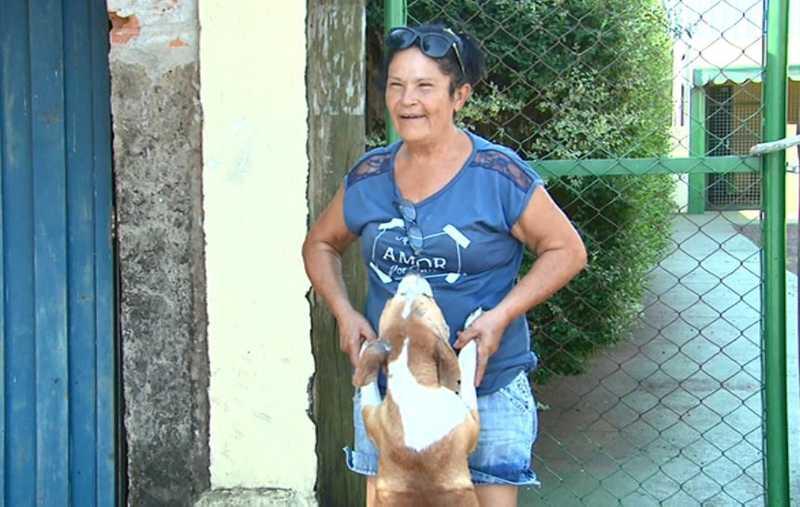 A voluntária Ilza Novaes Scutti ajuda a cuidar dos cães em Araraquara — Foto: Reprodução/EPTV