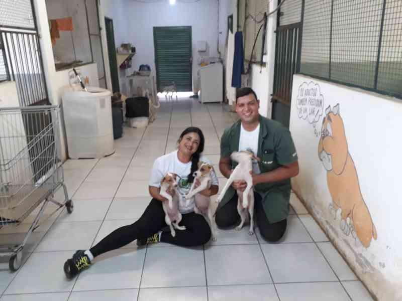 Cães e gatos esperam pela adoção no CCZ de Bauru, SP