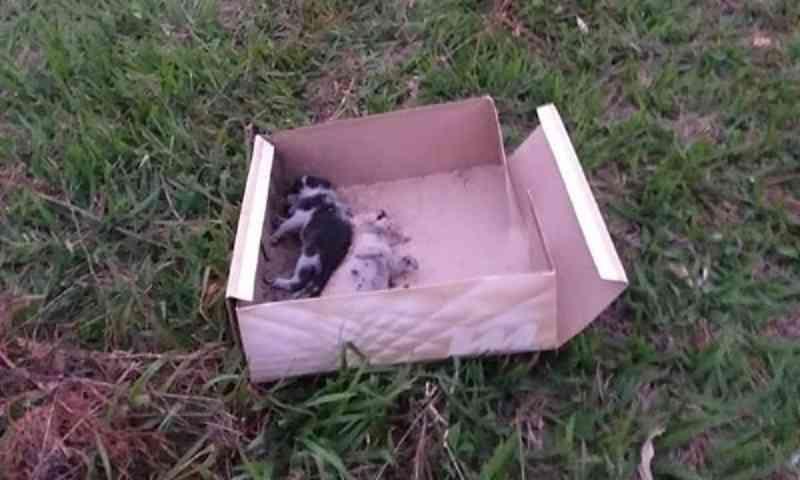 Filhotes de gato morrem após serem abandonados em rodovia em Cândido Mota, SP