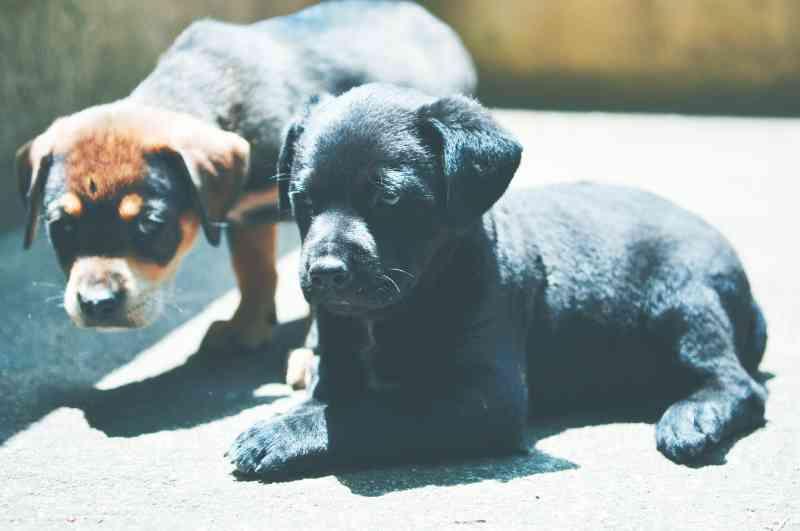 Diadema (SP) é a que mais captura e sacrifica animais de rua